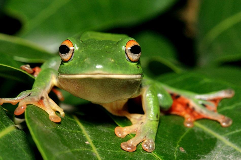 「青蛙」的圖片搜尋結果